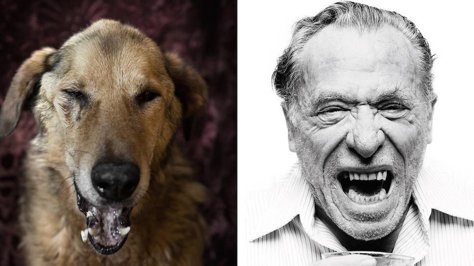 charles-bukowski-dog