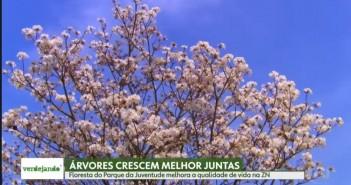 SP1 / TV Globo. Foto: Reprodução.